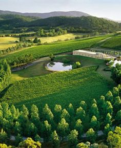 Tarrawarra in the Yarra Valley ~ Melbourne, Australia. This place is absolutely gorgeous. Great food and wine. Gorgeous food, views, atmosphere. Love it!