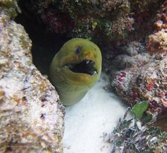 Looks like he's laughing out loud! #GrandCayman #Snorkelling