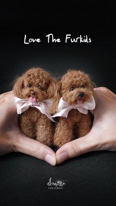 Okay I found my new obsession! I want to make one of these ASAP! Red Poodle needle felted Dog