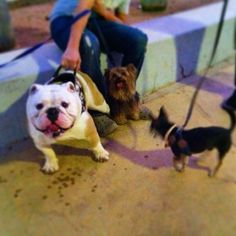 Photo taken by @capo.bulldogvzla on Instagram, pinned via the InstaPin iOS App! (07/25/2014) mis Amigos Caninos Titina y Albeiro