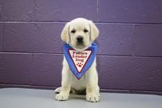 Future Leader Dog for the Blind