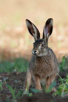 """?"" by Ivan Ivanov on 500px - Rabbit"