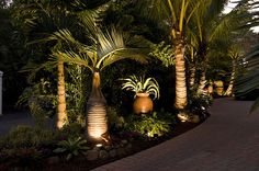 florida garden ideas, lighted Tropical Palm Trees