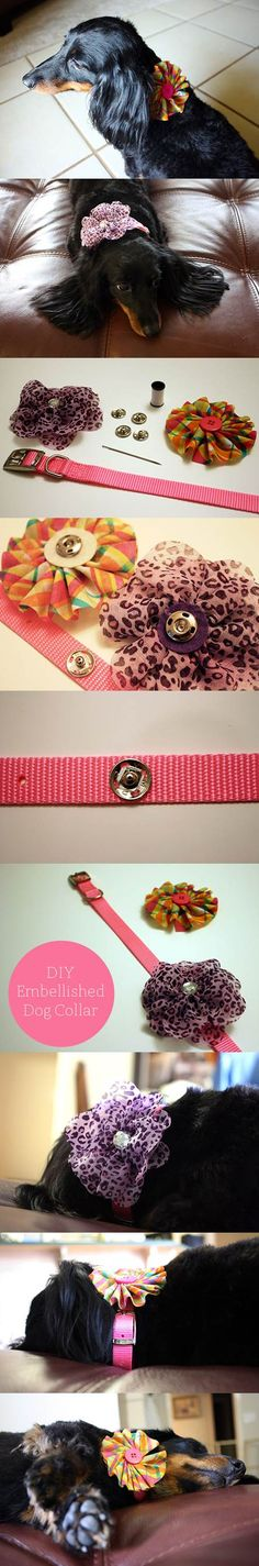 DIY Interchangeable Embellished Dog Collar 2