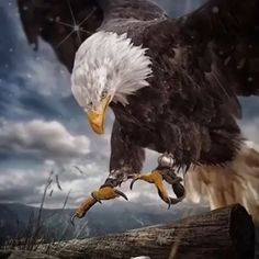 Wild Animal Wallpaper, Eagle Wallpaper, Planets Wallpaper, Galaxy Wallpaper, Eagle Pictures, Tiger Pictures, Native American Paintings, Native American Pictures, American Indian Art