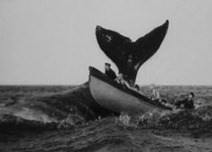 """Nantucket Sleighride - term used by """"Nantucket whalers to describe what occurs… Bateau Pirate, Foto Transfer, Whale Watching, Nantucket, Vintage Photography, Sea Creatures, Under The Sea, Black And White Photography, Whales"""