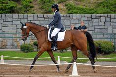 Onassis- 3rd Level, Holstein mare