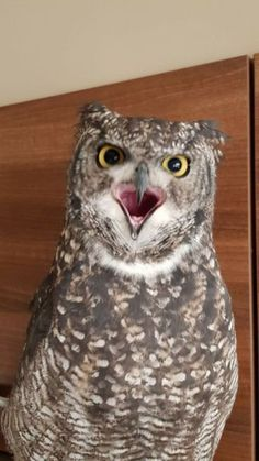 Funny Owls 17