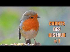 Bird Houses, Birds, Cage, Channel, Animals, Beautiful, Amazing, Youtube, Wild Animals