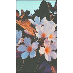 Rainbow Aesthetic, Sky Aesthetic, Flower Background Wallpaper, Flower Backgrounds, Black Aesthetic Wallpaper, Aesthetic Wallpapers, Cute Girl Pic, Disney Wallpaper, Sweet Girls