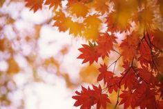 Bringer of Leaves