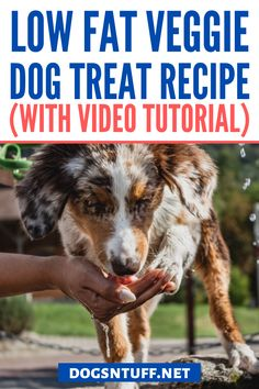 In this article, we're going to share with you how to make a homemade vegetarian dog treat. #veggiedogrecipe #dogfood #dogrecipes Dog Treat Recipes, Dog Food Recipes, Carrot Dogs, Sources Of Dietary Fiber, Veggie Dogs, Dog Facts, Dog Rules, Dog Biscuits, Dog Behavior