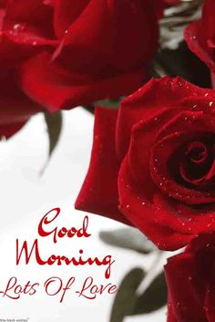 Good Morning Quotes Discover Top 134 Good Morning Wishes With Rose - [ Best HD Images ] Red roses good morning images. Gud Morning Images, Latest Good Morning Images, Happy Morning Quotes, Good Morning Quotes For Him, Morning Pictures, Morning Messages, Morning Pics, Good Morning Kisses, Good Morning Cards