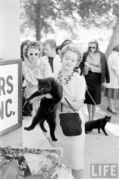 """Black Cat Auditions In Hollywood"""" (1961) vintage everyday"""
