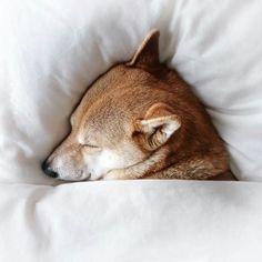 Menswear dog sick day