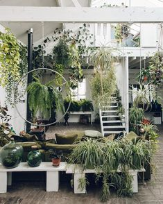 A little treat from us; take a tour through this urban jungle via the link in our profile. 🌿