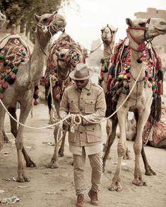 A mind that is stretched by a new experience can never go back to its old dimensions. Tourist Spots, Adventure Travel, Egypt, Camel, Travel Destinations, Exotic, Tropical, Pictures, Animals