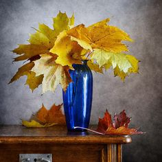 http://nikolay-panov.artistwebsites.com/products/maple-leaves-in-blue-vase-nikolay-panov-art-print.html • Still life with bouquet of autumn yellow maple leaves in blue vase and foliage on wooden table collected in fall season