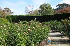 Gardening:Sunny Botanical Gardens Design Tricks Real Estate Gardening Decor Home Exterior Decoration House Garden Ideas Rose Garden St Kilda 8 Design Tricks From Sunny Botanical Gardens