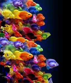 Bag of Fishing Skittles! Brilliant colors make me happy and vibrantly energetic...