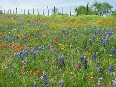 Like decorations on a cake, the wildflowers sprinkle the landscape...opening your senses to their beauty.