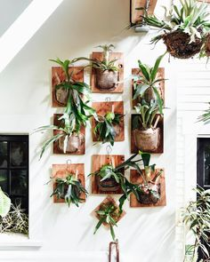 Feeling pretty pleased with the staghorn fern situation. Fully stocked for the weekend  Grab one in store or let us ship it to ya - details at the link in profile