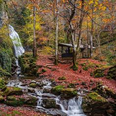 #waterfalls #mountains #forests #beautiful #photography #travephotography#openmyword #travelphoto#mytravelgrams #coloroftheseason #colorsofautumn #colors🎨 #coolplace #nicepicture #myview#chillyday #myinstagram#naturallove #instaphoto #instaphotography #beautifulday #autumn #autumnishere #nicepicture #mybulgaria #Vitosha #vitoshamountain #beautifulbulgaria #Bulgaria🔝