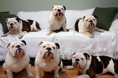 ❤ Happy Family !! Six bully fur babies - guess everyone has their day to be in charge and Mom get's one day of her own LOL ❤
