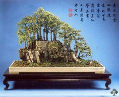 Chinese Penjing gallery - Bonsai Empire
