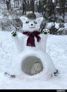 Cat Care Kittens The Es-cat-moes reside in igloos which effectively keep the wind out and are quite cozy- keeping up with the neighbors, results in extravagant igloos like this snow cat! I Love Cats, Crazy Cats, Cool Cats, Kittens Cutest, Cats And Kittens, Baby Kittens, Animals And Pets, Cute Animals, Animals Images