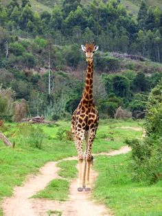 Let's go on Safari! Get some serious big 5 inspiration in this post, featuring giraffe, lions, rhino and springbok!