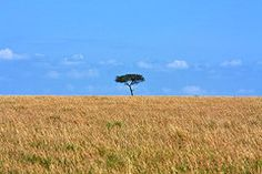 African Landscape Featured Images - African Grasslands  by Aidan Moran