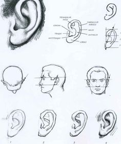 i like the pictures of individual facial features because they are hard to all get right together