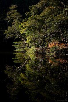 A Natureza e seus reflexos - Parque Municipal Lago do Caiçara / RJ    #fotografia #meioambiente
