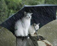 amores gatos...