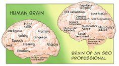 Cerebro de un SEO