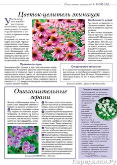 Corporate Flowers, Small Farm, Health, Plants, Gardening, Books, Libros, Health Care, Lawn And Garden