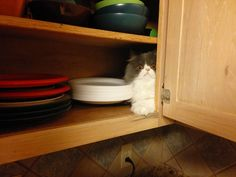 """Funny Memes – [""""The paper plates? They're in the cupboard next to the demented cat. Cute Cats, Funny Cats, Funny Animals, Cute Animals, Funny Photos, Best Funny Pictures, Glass Shark, Cat Fails, Curious Cat"""