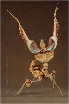Aliens on Earth: macro pictures of praying mantises and bugs by Igor Siwanowicz