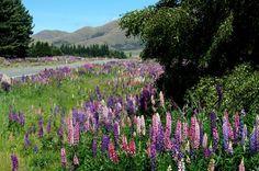 Neuseeland ist bekannt für seine Hobbits, unglaublich spektakuläre Landschaften, guten Wein, tolle Strände, Gletscher, unberührte Natur, eine spannende Tierwelt, die lange Flugzeit bis and andere E...
