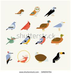 Vector bird icon collection. Different birds species like: owl, toucan, hummingbird, bullfinch and more vector illustration birds