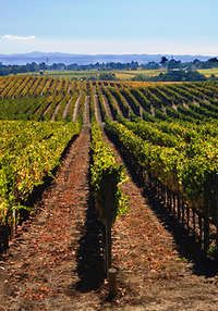Sonoma County, California.  Wine Country.  Go to www.YourTravelVideos.com or just click on photo for home videos and much more on sites like this.