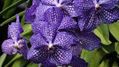 Beautiful flower orchids