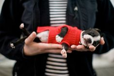 Not sure what's cuter - the puppy's sweater or the fact that it's sleeping this way!