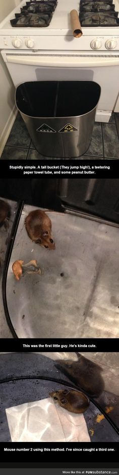 This ingeniously simple mouse trap really worked