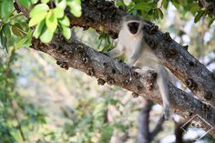 Où dormir dans le parc national Kruger ? - My Wildlife Parc National Kruger, Wildlife, Bird, Instagram, Animals, Outdoor, The Park, Outdoors, Animales
