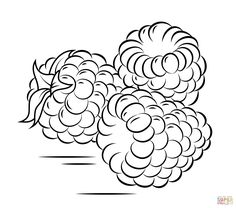 rambutan branch coloring page from rambutan category select from 26332 printable crafts of cartoons nature animals bible and many more