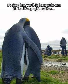 Poor Penguin // funny pictures - funny photos - funny images - funny pics - funny quotes - #lol #humor #funnypictures