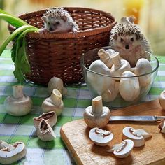 I can see you cut mushrooms quietly