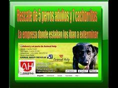 Rescate de 5 perros y 7 cachorritos - 9 4 15 en ANIMAL HELP URUGUAY